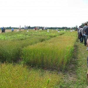 2013 Field Day 210